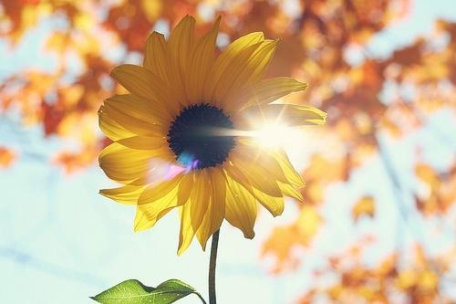 黑色素瘤与阳光的关系-绘佳医疗