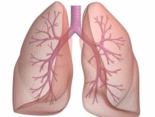 小细胞肺癌一线EP方案治疗后,帕唑帕尼维持治疗显神通