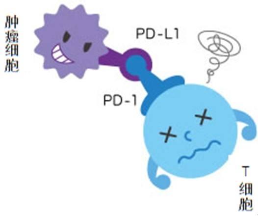 PD-1有副作用,别慌,实验数据告诉你